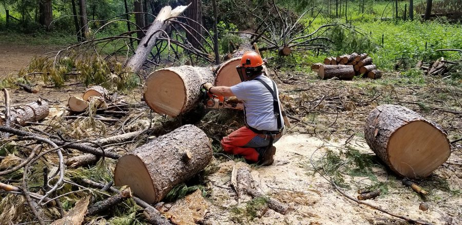 A chainsaw master at work