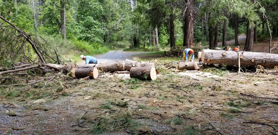 Removing downed trees