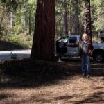 Cleared campsite