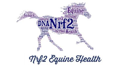 DNA Nrf2 Equine Health